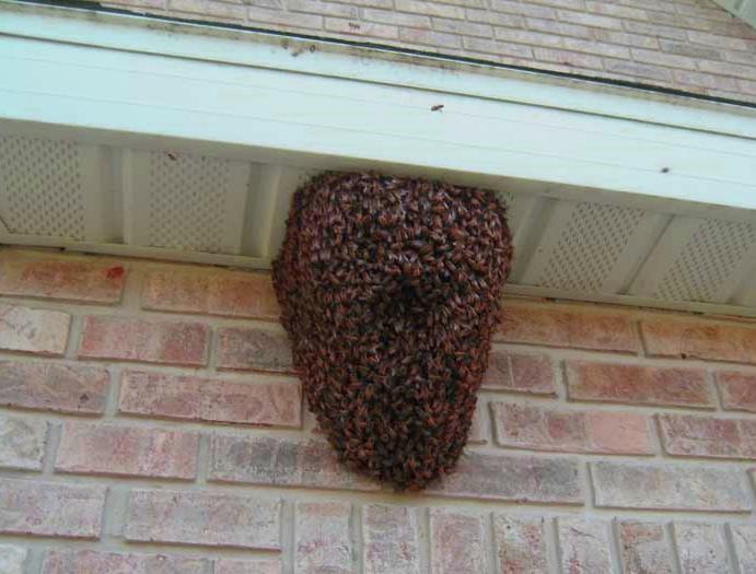 bijen verwijderen aan huis