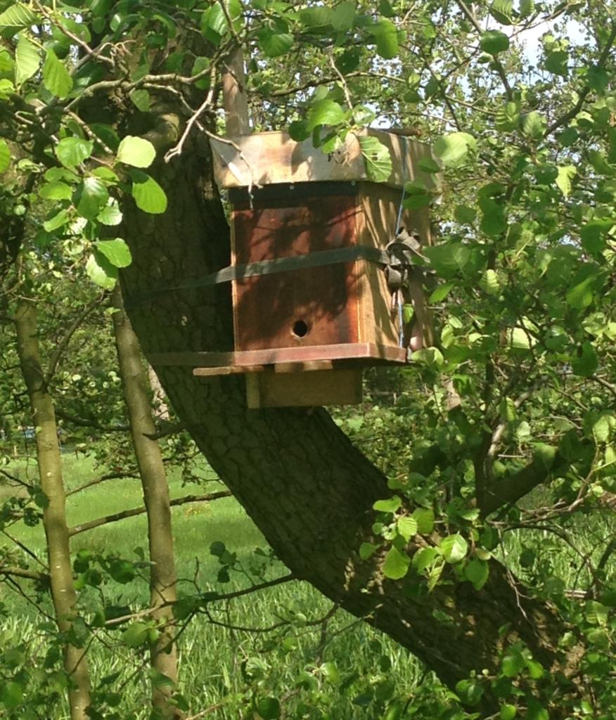 lokkast voor bijen aan els