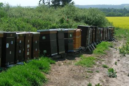 reizen met bijenkasten naar koolzaad
