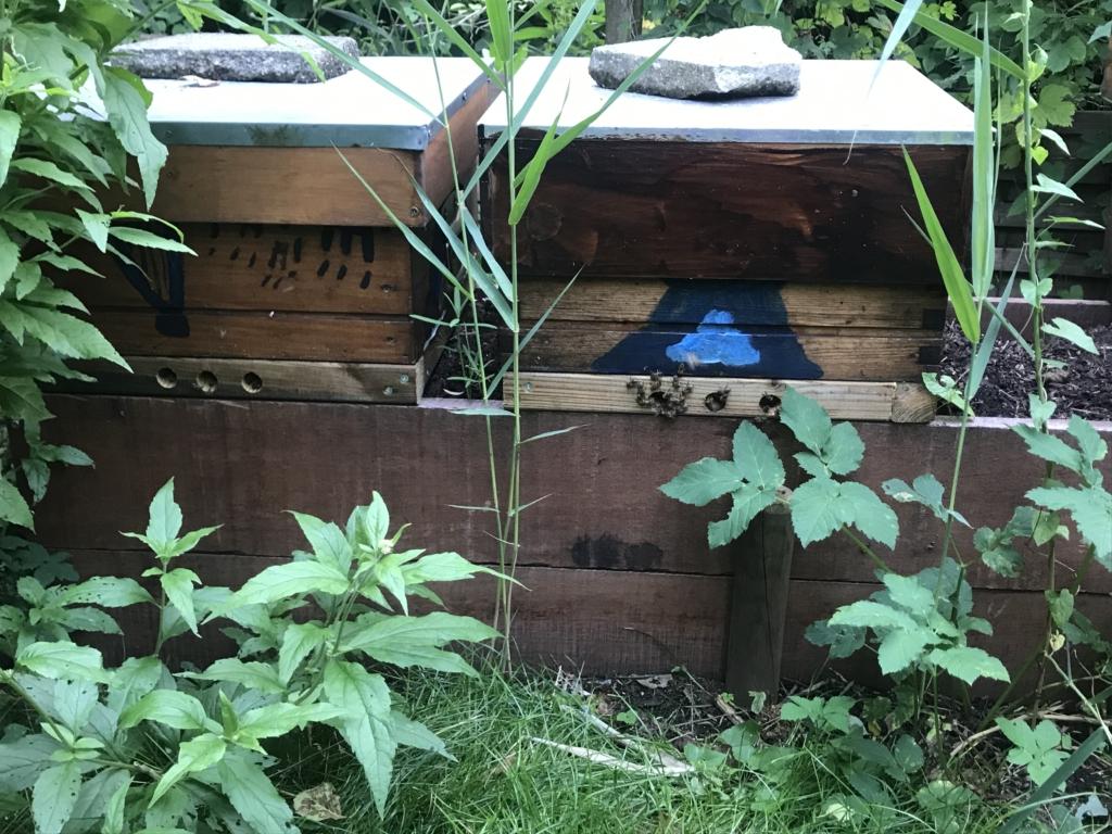 bijenvolken op compost met roofmijten