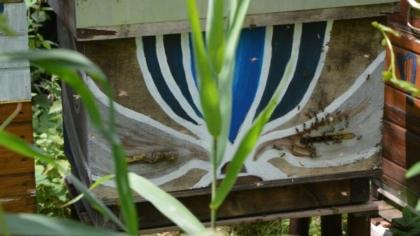 horizontale simplex kast doet dienst als zwermlokkast, scoutsbijen inspecteren de kast intens